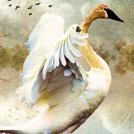Kathy Bassett - Swan Sense