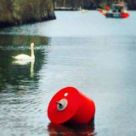 Harbour Lefts - #swan #wildlife #cornwall #harbour