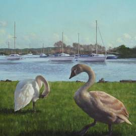 Martin Davey - swans at Christchurch harbour