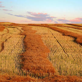 Larry Trupp - Swathed Field