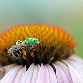 Juergen Roth - Sweet Bee