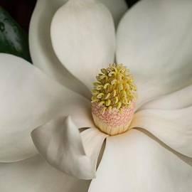 ML Jones - Sweet Magnolia