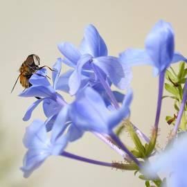 Leslie Ann Boisselle - Sweet Nectar