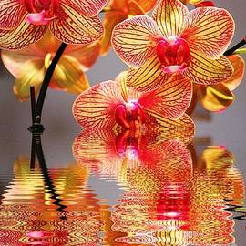 Judy Palkimas - Sweet Orchid Reflection