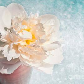 VIAINA Visual Artist - Sweet Peony