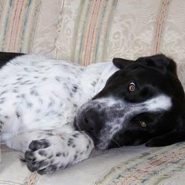 Lisa Young - Sweet Pup