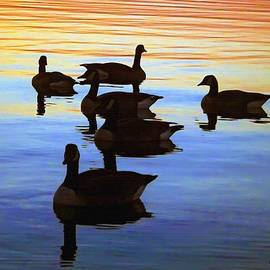 Brian Wallace - Swimming Geese