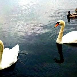 ConnieAnn LaPointe - Swimming in Lake Anna