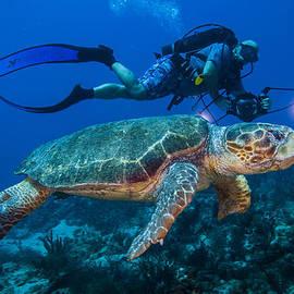 Sandra Edwards - Swimming With Turtle