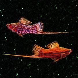 Mario  Perez - Swordfish