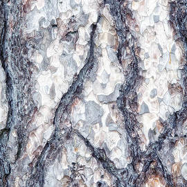 Tom Mc Nemar - Sycamore Bark Abstract