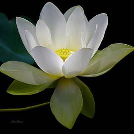 Julie Palencia - Symbolic White Lotus