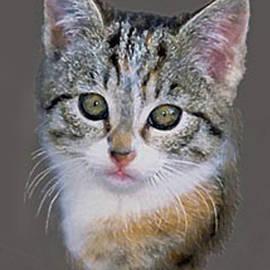 Bob and Nadine Johnston - Tabby  Kitten