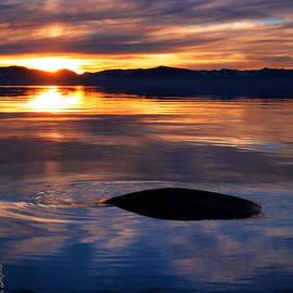 Simone Blakeney - Tahoe Reflections