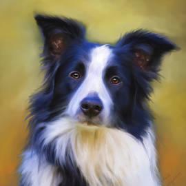 Michelle Wrighton - Beautiful Border Collie Portrait