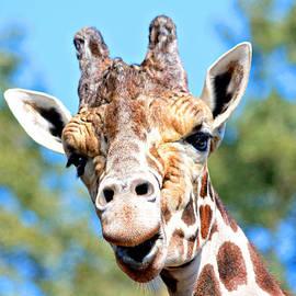 Trina  Ansel - Talking Giraffe