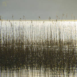 Bill Cannon - Tall Grass on Lough Eske - Donegal Ireland