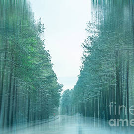 Kathy Liebrum Bailey - Tall Trees Along The Icy Roadway