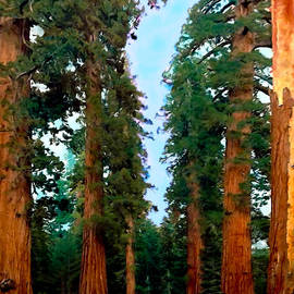 Bob and Nadine Johnston - Tall Trees in Yosemite National Park