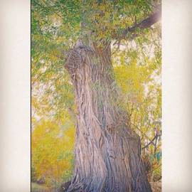 Jennifer Kenyon - Tall Trees With Tall
