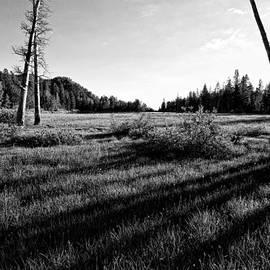Kurt Golgart - Tamarack Meadows