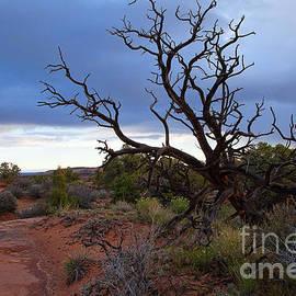 Jim Garrison - Tangled Sky