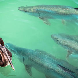 Karen Wiles - Tarpon Encounter