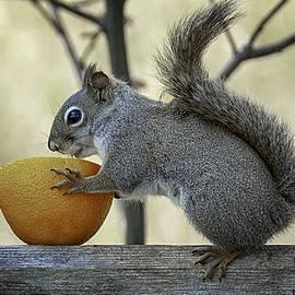 LeeAnn McLaneGoetz McLaneGoetzStudioLLCcom - Tasty orange bowl of love