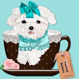 Margaret Newcomb - Teacup Baby Maltese