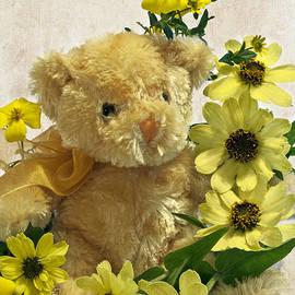 Sandra Foster - Teddy Bear - Yellow Toto Lemon Rudbeckia