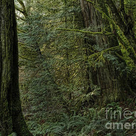 Inge Riis McDonald - Temperate rainforest