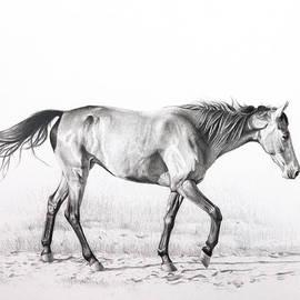 Karen Broemmelsick - Tennessee Walking Horse