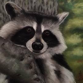 Annamarie Sidella-Felts - Tennessee Wildlife - Raccoon