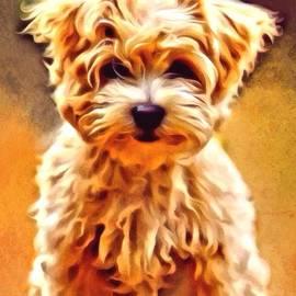 Scott Wallace - Terrier Portrait