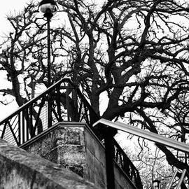 Pedro Cardona - Horrific tree for a  witches night