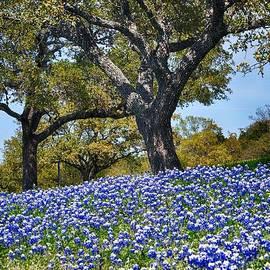 Kristina Deane - Texas Bluebonnet Hill