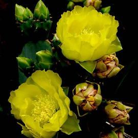 James Granberry - Texas Rose VIII