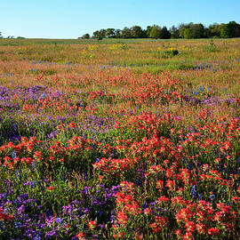 Lynn Bauer - Texas Spring Wildflowers