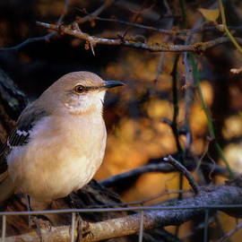 Neva Cruddas - Texas State Bird - Mockingbird