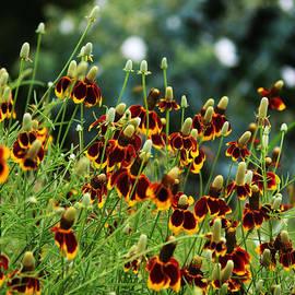 Valerie Loop - Texas Wildflowers