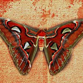 Barbara S Nickerson - Textured Butterfly