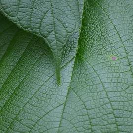Maria Urso  - Textured Green