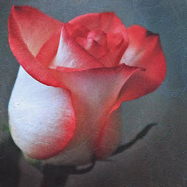Tracy F - Textured Rose