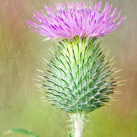 M S Photography Art - Textured Spear Thistle