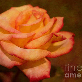 Arlene Carmel - Textured Star Rose