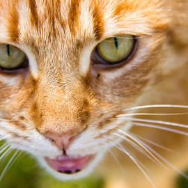 Dave Cawkwell - That Garfield Stare