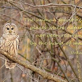 Judy Genovese - The Always Wise Owl