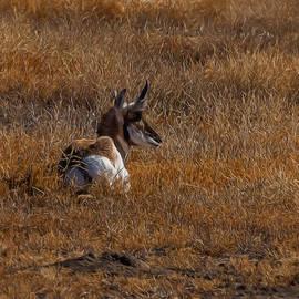 Ernie Echols - The Antelope Digital Art