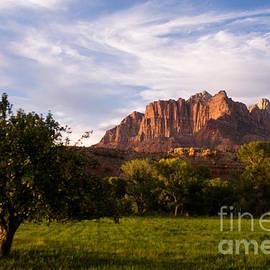 Robert Ford - The Apple tree and Late Afternon Sun Glow on Mt Kinesava Rockville Utah