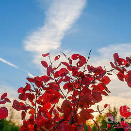 Ismo Raisanen - The Autumn Colors